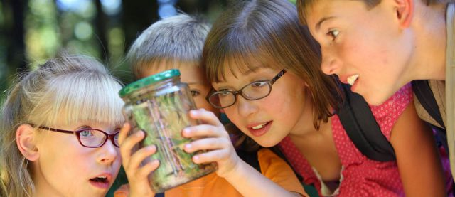 Kids inspecting insects